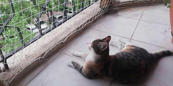Cat Safety Net
